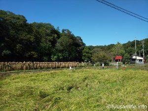 天日干しの稲と案山子があるの風景写真