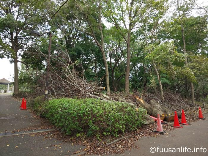 遊歩道内倒木の写真