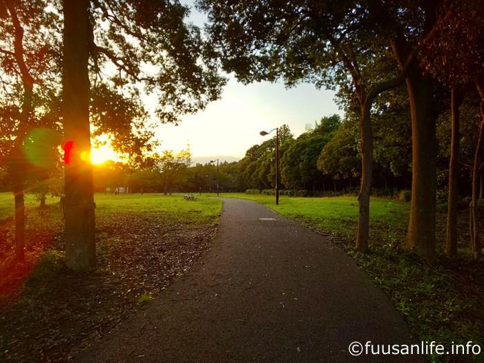 夕方の遊歩道の写真